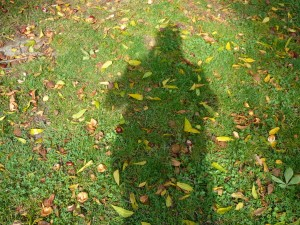 Der Schatten des Autors