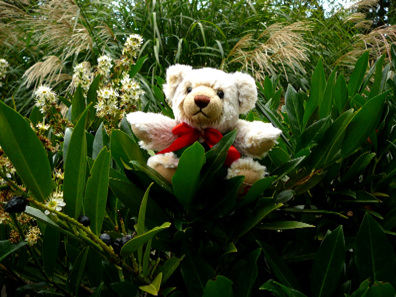 Teddy-2014